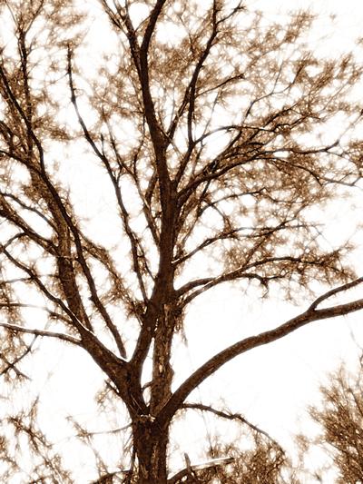 arty tree