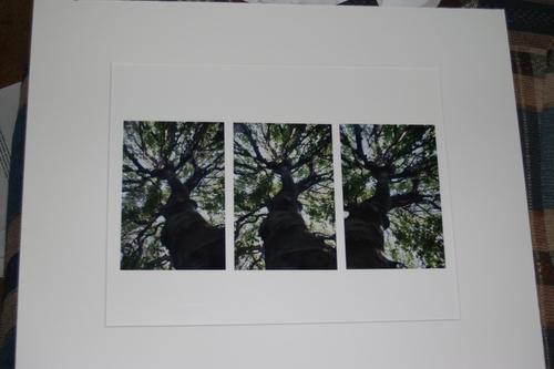 tree * 3