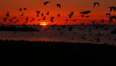 birds silhouetted in a sunset