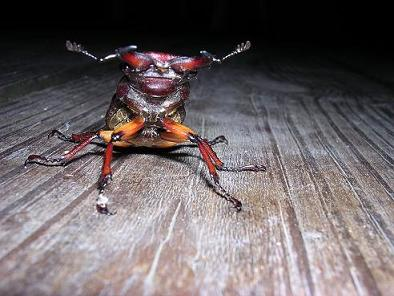 coolest bug ever!